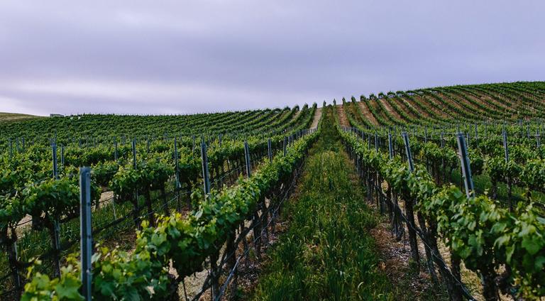 Laetitia Vineyard & Wine Tasting