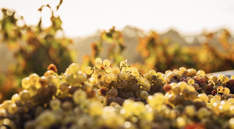 SLO Wines